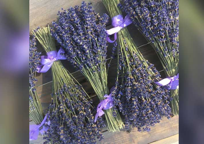 Lavender ready for market - Deb Knight